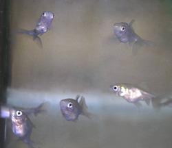 稚魚セット2-13