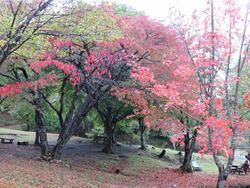 オートキャンプ場 紅葉