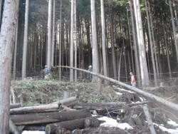 3.倒木処理①