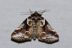 トガリバ2007-07-05 075