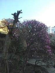 香取神社3-11b