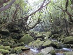屋久島 (153)a