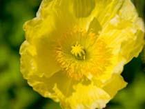 flower_img03[1].jpg