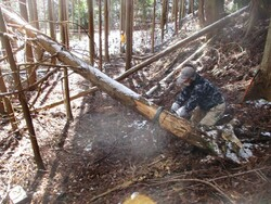 4.倒木処理②