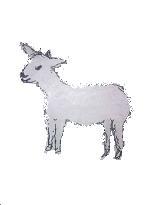弱った羊.jpg
