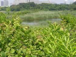 葛西臨海公園5-31d