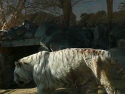 !!クリスマスの東武動物園 2011 146.JPG