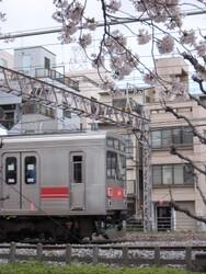 ★1300桜と池上・多摩川線 014.JPG