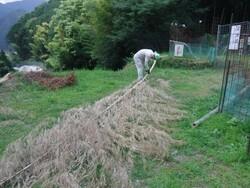8_竹の枝払い