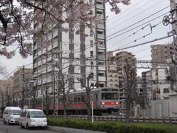 ★1323桜と池上・多摩川線 026.JPG