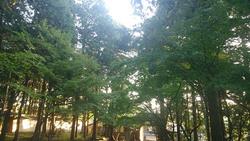 多田神社の朝.jpg