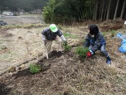 2.ツツジの植栽①