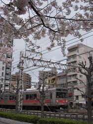 ★1323桜と池上・多摩川線 010.JPG