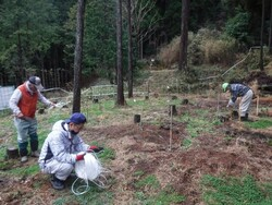 1.広葉樹の補植作業