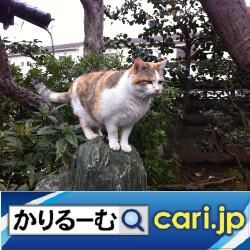 1_cat191129w500x500