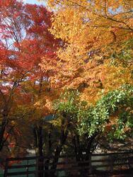 音水湖 紅葉