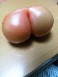 おもしろトマト.jpg