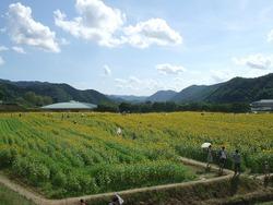 ひまわり畑(スポーツ公園)