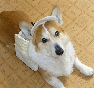 犬4_.jpg