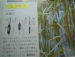 DSCN8942