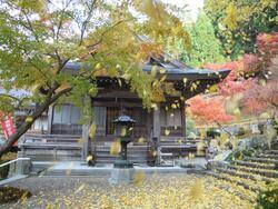 長源寺 銀杏