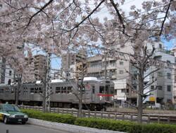 ★7700桜と池上・多摩川線 006.JPG