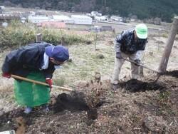 3.ツツジの植栽②