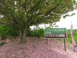 竹林公園看板