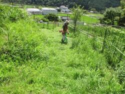 1_作業道の草刈作業