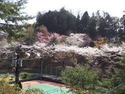 永山テニスコート