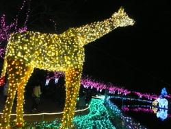 !!クリスマスの東武動物園 2011 358.JPG