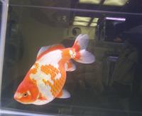 観賞魚フェア8.JPG