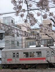 ★1020桜と池上・多摩川線 012.JPG