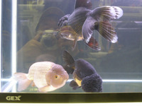 観賞魚フェア9.JPG