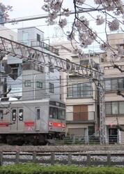 ★1320桜と池上・多摩川線 013.JPG