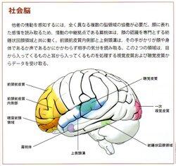 社会脳.jpg