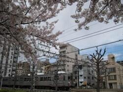 ★東急クラシック&桜と池上・多摩川線 008.JPG