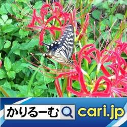 22_Butterfly200706w500x500