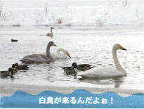 s_008_02.jpg