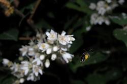 ハチひしょう1.jpg