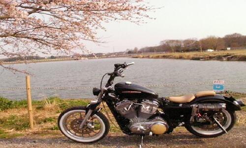 べっちょ山&ハーレー桜!!2010!! 040
