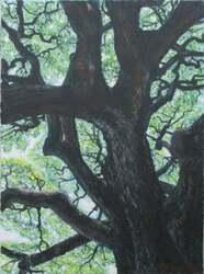 H.Hさん「この木なんの木」油絵P8トリ