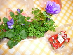 お花とイチゴ!! 004.JPG