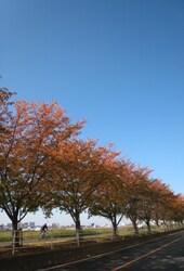 20131123@秋の鵜の木ウォーク.JPG