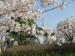 夢公園の桜③