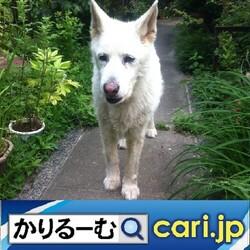 47_dog20210309w500x500
