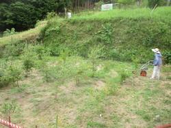 7_ブルーベリー園の草刈作業③